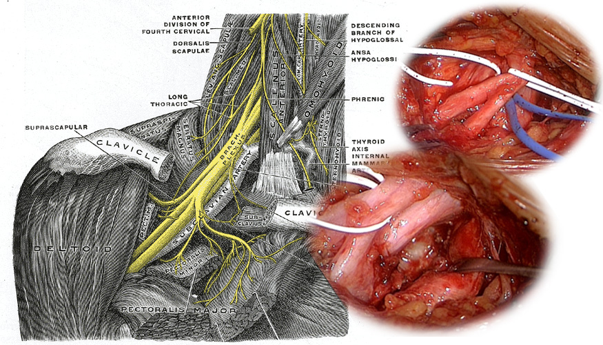 Pudendusnerv anal sphincter